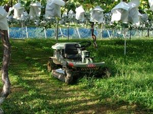 ぶどう園の草刈り