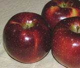 りんご「秋映」